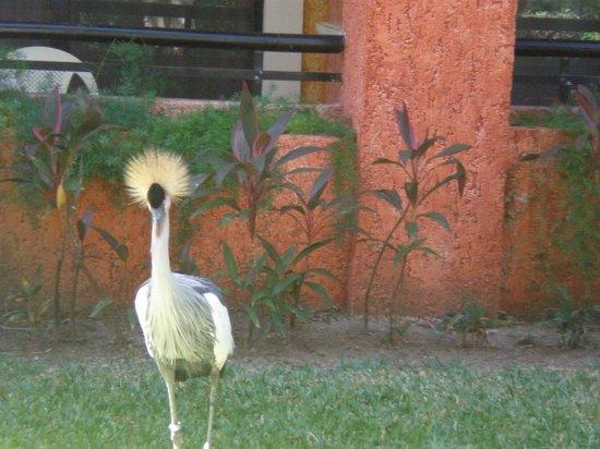 Iberostar Quetzal Playacar: Groovy Hair Doo!!!