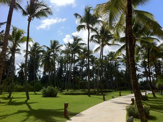 Barcelo Bavaro Palace: Tall Palm Trees on Beach