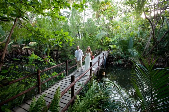 Kewarra Beach Resort & Spa : The stunning rainforest and creek on the resort