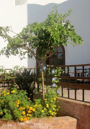 Dahab Resort: DININGROOM OUTSIDE