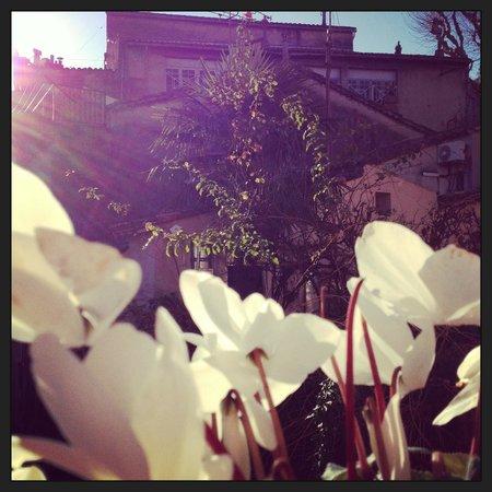 Chambres Bisou : Terrazzo fiorito