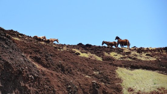 Playa Ovahe: Horses on cliff above