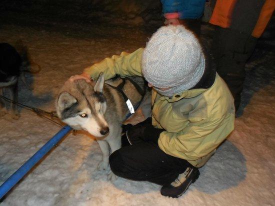 Valley Snow Dogz: Meeting the dogz.