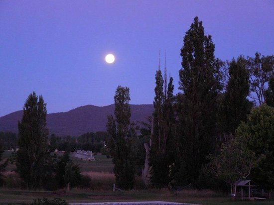 Mudgee's Getaway Cottages: Backyard by night