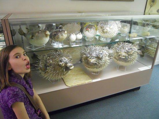 Stones 'n Bones Museum: Blow Fish
