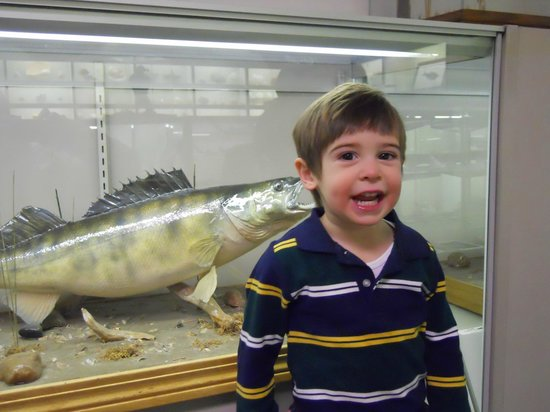 Stones 'n Bones Museum : Awesome display of fish upstairs
