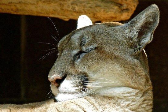 Henry Doorly Zoo: Tired