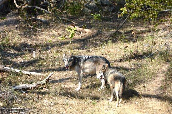 Simmons wildlife safari