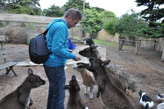 Paul's Place Wildlife Sanctuary: More please!