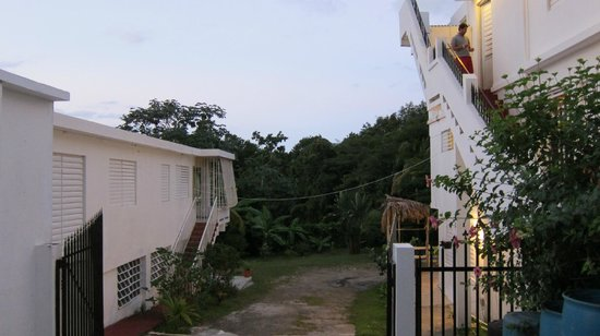 Tropical Guest House: Joe's garden