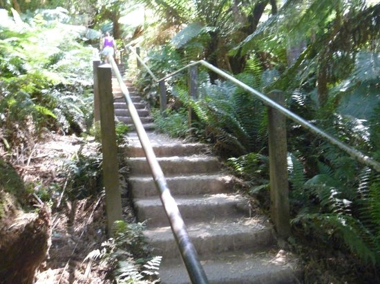 Tree Fern Gully Track: The steps