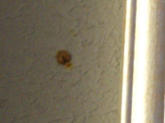 Americas Best Value Inn Vicksburg: One of the 100,000 plus ladybugs in my room