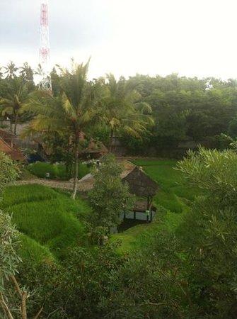 Padi City Resort: suasana pedesaan, gazebo di tengah sawah