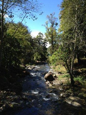 Suenos del Bosque : Río Savegre