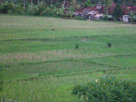 Villa Ayo : view from upstairs balcony