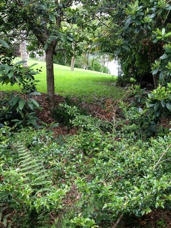 Gaia Retreat & Spa: the retreat grounds 