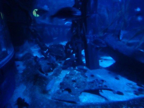 tortue picture of aquarium sea val d europe marne la vallee tripadvisor