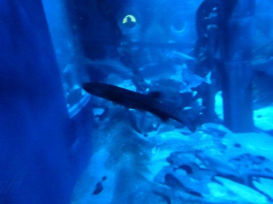 requin picture of aquarium sea val d europe marne la vallee tripadvisor