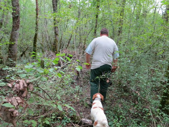 Tikel: Truffle-hunting with the dogs 