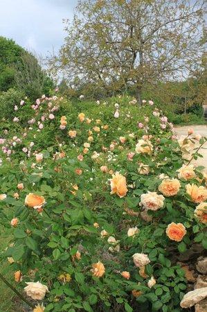 Leone Haute: Le jardin en mai