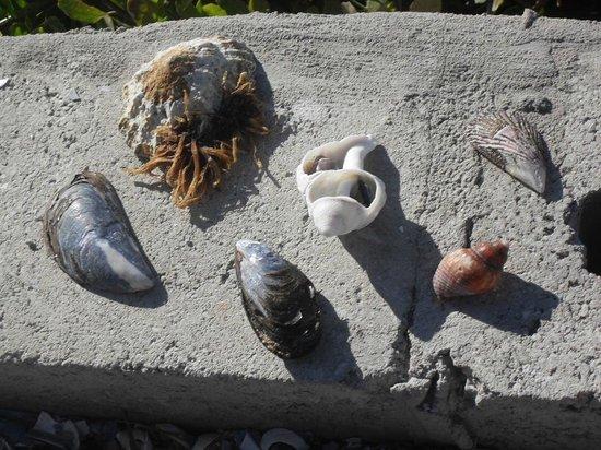 Grootvlei Guest Farm: Bijna alles met schelpen