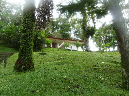 Villa Decary: Latania