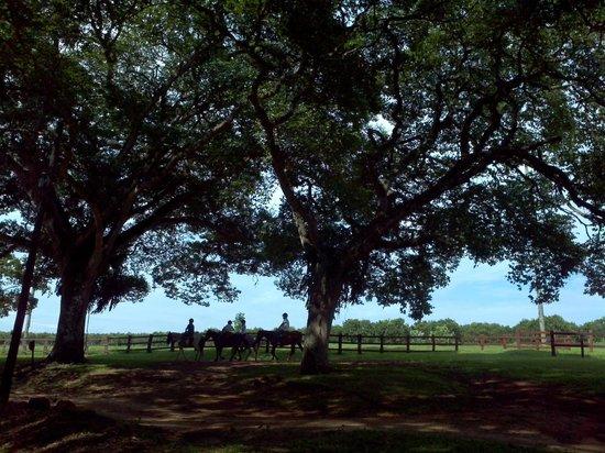 Hotel Fazenda Areia que Canta: Passeio a cavalo