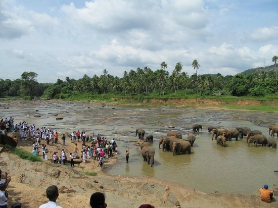 Pinnawala Elephant Orphanage: It is crowded