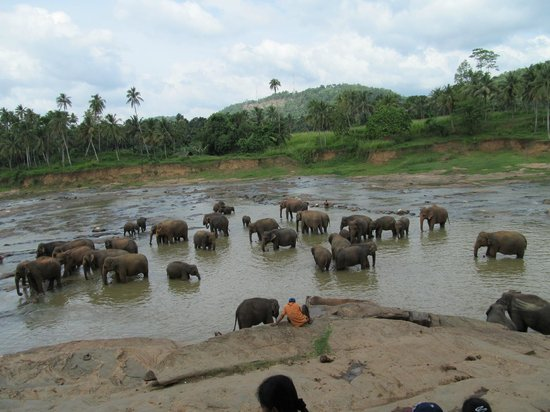 Pinnawala Elephant Orphanage: what a great sight!