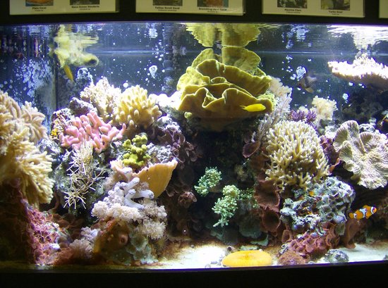 St. Lucie County Aquarium - Smithsonian Marine Ecosystems Exhibit: Caribbean coral reef