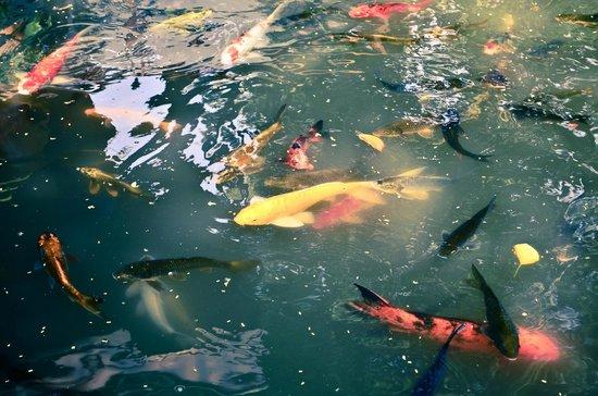 Hyatt Regency Hua Hin: Pond