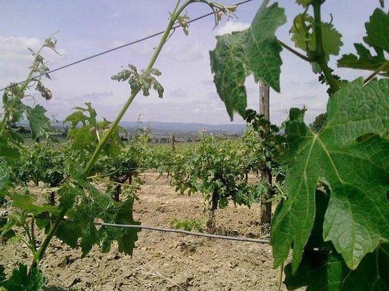 O'Vineyards Bed & Breakfast - Carcassonne照片