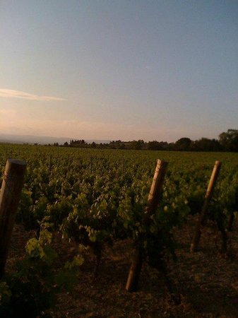 O'Vineyards Bed & Breakfast - Carcassonne: Taking a stroll among the vines before sunset
