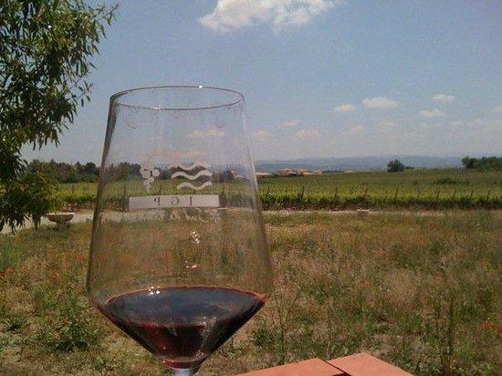 O'Vineyards Bed & Breakfast - Carcassonne: Sante!