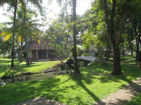 Coconut Lagoon: View