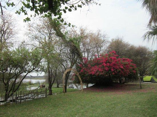 Il giardino proprio sul fiume picture of okavango river lodge maun tripadvisor - Il giardino sul fiume ...