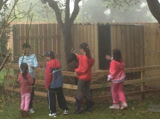 Li Tao Wan: The pet goat charmed our kids