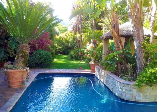 Treetops Guest House: Pool & Tropical Garden