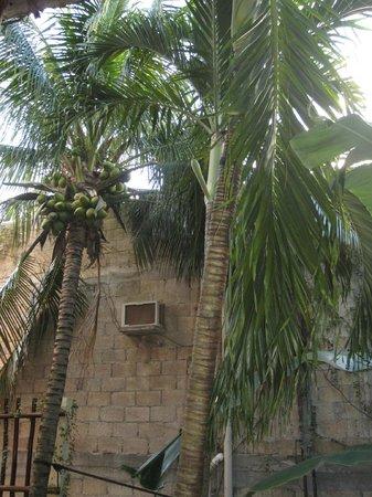 Kinbe Hotel: giardino interno