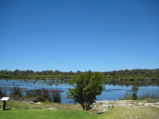 Yanchep National Park: Lake