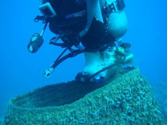 Dive Dominica: Giant Barrel Sponge