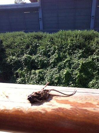 Nola, Italy: sul balcone della camera