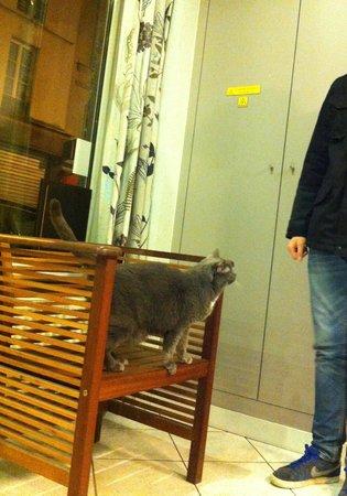 Cosmo's Hotel: de huiskat!