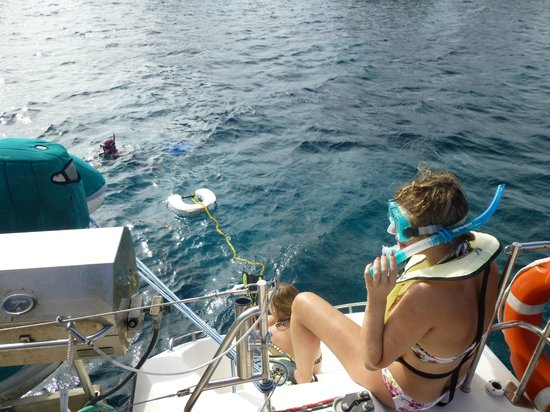 Aristocat Charters: A bit of snorkelling