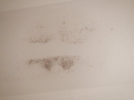 Hotel Fantasia : Mold on the ceiling