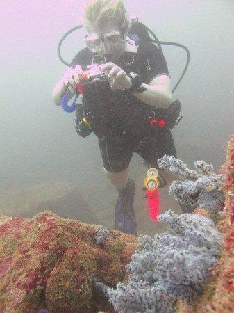 Submarine Diving School: Black corals at Vissa Gala