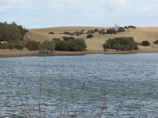 El Faro de Maspalomas : Naturschutzgebiet in der Nähe des Faro