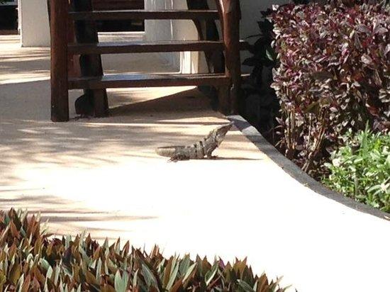 Grand Riviera Princess All Suites Resort & Spa: Wildlife