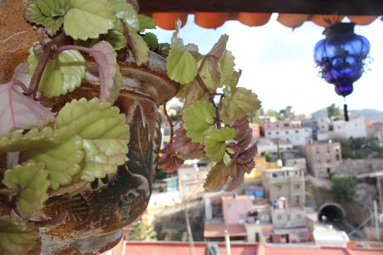 La Casa Azul: View from the rooftop terrace