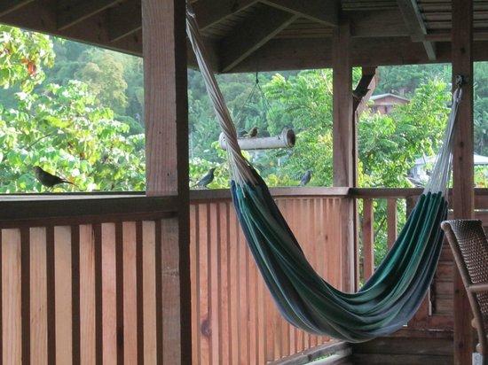 Castara Retreats: a place to chill....